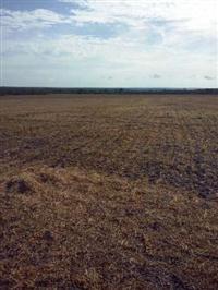 Fazenda com 348,48 hectares ( Pedro Afonso - TO )