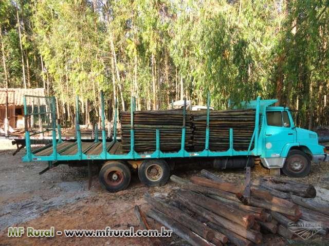 Mourão de eucalipto tratado para cerca