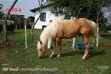 Cavalos Quarto de Milha