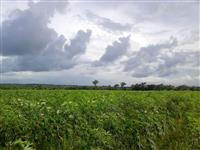 Fazenda em Bragança