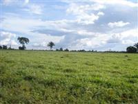 Terreno para Industrias 160.000m² - Patos de Minas - MG