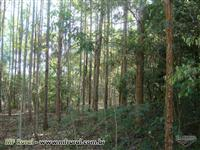 Fazenda de eucalipto com as terras