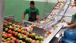 Máquinas para beneficiar, classificar, escolher, lavar, secar e polir tomate