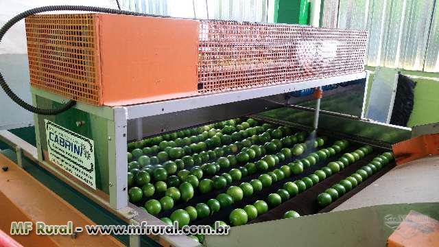 Máquinas para beneficiar, classificar, escolher, lavar, secar e polir limão