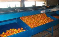 Máquinas para beneficiar, classificar, escolher, lavar, secar e polir caqui