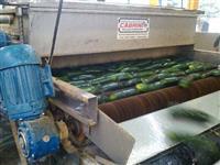 Máquinas para beneficiar, classificar, escolher, lavar e secar pepino