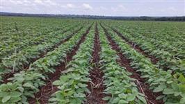 Fazenda de lavoura na região de Miranorte do Tocantins, Miracema, 120 km de Palmas - Tocantins