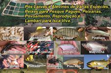 Peixe Vivo de Varias Especies