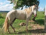 cavalo manga larga e potra manga larga