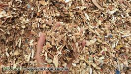 Cavaco de Madeira de Eucalipto e Pinus, Reciclado, Serragem e Casca de Madeira
