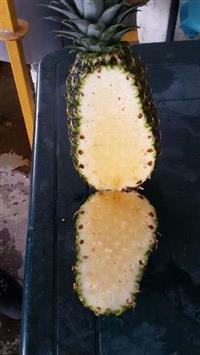 Abacaxi exportaçao