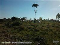 Fazenda em Pacajá-PA - excelente para gado de corte