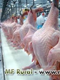 Vendo  Frangos Halal, Pés de Frango  e cortes em geral