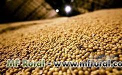SOJA GMO # 2 OU NOW GMO#2  PARA MERCADO EXTERNO E EXPORTAÇÃO