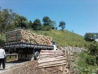 Compramos Torras de eucaliptos e plantação em todo o Brasil