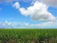Fazenda em Macapa - AP com 600 ha.
