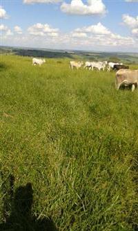 Vendo fazenda montada para pecuária na região de Marília/Echaporâ