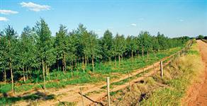 Vendo derivados de eucalipto p/ construção civil e biomassa-cavaco de madeira