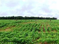 Vendo Fazenda no Circuito Agrícola de Uruaçu-GO com terra fertil