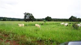 Vendo fazenda em Mato Grosso formada para pecuaria com pagamento em tdas