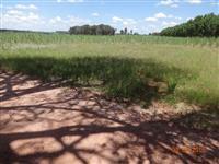 Vendo fazenda entre Tambau e Santa Rosa do Viterbo com pasto e cana propria