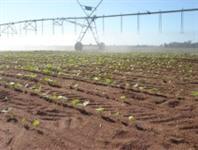 Vendo fazenda em Goias com pivo de irrigação para plantio e pasto