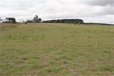 Vendo fazenda na região de Itapetininga completa para pecuária