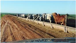 Vendo fazenda na região de Araçatuba para plantio e pecuária