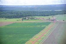 Procuro propriedade rural na região de Ituverava/SP