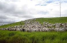 Vendo fazenda em Rondol�ndia/MT com 148.000 ha para pecuaria
