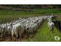 Vendo fazenda na região de Echapora formada para atividade pecuária e plantio
