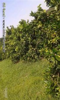 Vendo sítio em Fernão/SP com pasto e lavoura de laranja