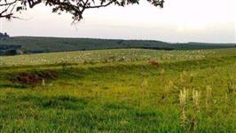 Vendo sítio na região de Duartina/SP formado para pecuária com rio no fundo