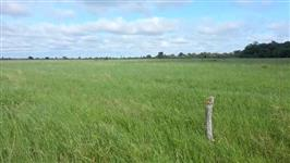 Vendo sítio em Fernão/SP formado em pasto com eucalipto