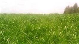 Procuro fazendas em MT para investimento com dividas direto com o proprietario