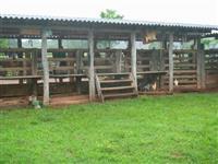 Vendo fazenda para pecuaria e plantio em Pedra Preta/MT