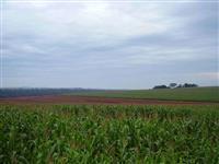 Vendo fazenda na região de Maringa para plantio e pecuaria com dividas