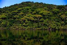 Vendo bioma mata atlântica no parque nacional do Parana