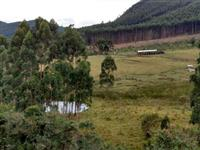 Vendo fazenda na região de Bragança Paulista/SP para pecuária com eucalipto e carvoaria