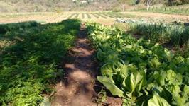 Vendo sítio em Vera Cruz/SP região de Marília/Garça/SP com café, represa,pasto e plantação