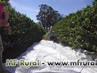 Lona para colheita de café sob medidas em polipropileno