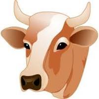 Venda de gado leiteiro