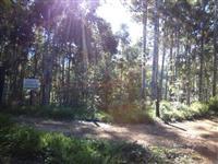 Fazenda formada em eucalipto com carvoaria completa excelete estrutura RENTAVEL