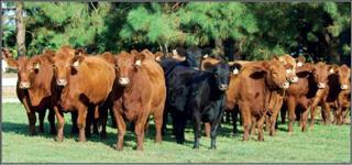 Rastreamento de gado
