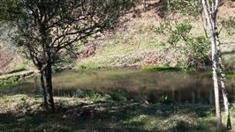 Chácara pinus e eucaliptos