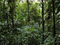 Área de Mata Atlântica, Reposição de Carbono compensação e multas Ambientais