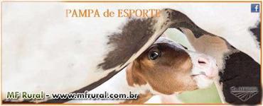 GARANHÃO PAMPA DE ESPORTE