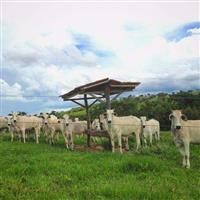 Fazenda Ipameri - 261 Hectares - Criação de Gado - Rica em água - Boa Estrutura