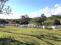 Fazenda Ipameri/GO - 261 Hectares - Criação de Gado - Rica em água - Boa Estrutura