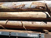 Toras de eucalipto e grevilha